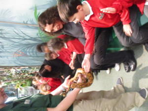 Year three children visited Bristol zoo. They were able to touch and hold creatures from the rainforests during a workshop linked to the Amazon rainforest.